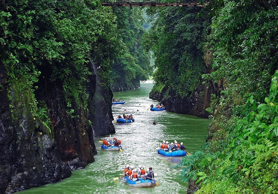 tree Boat water River vehicle boating canoe Jungle waterway rapid Forest lined surrounded wooded Raft