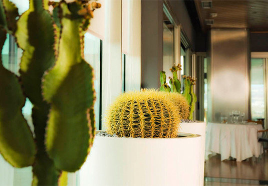 color yellow green plant flora flower botany land plant cactus floristry flowering plant spring