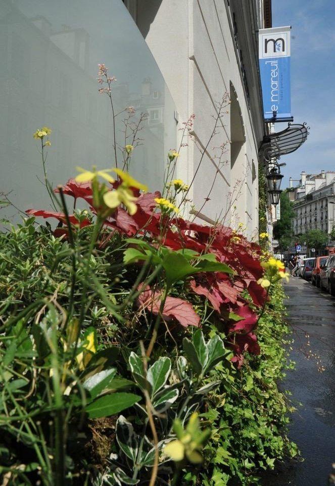 flower flora plant botany floristry flowering plant