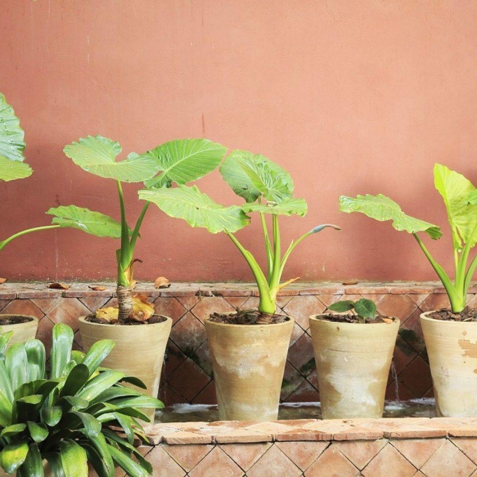 plant green flora flower botany land plant leaf floristry soil pot flowering plant plant stem herb flowerpot