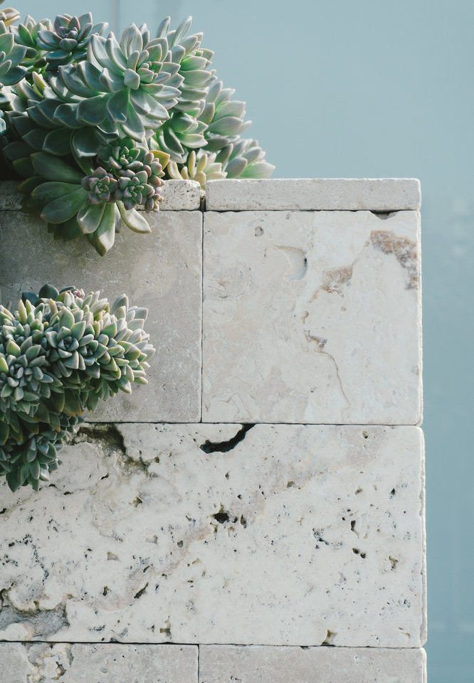 plant green rock bouquet flower ledge material cement stone concrete