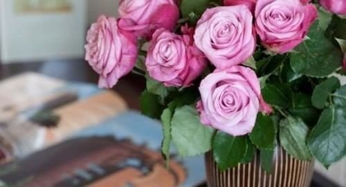 flower plant pink flower arranging rose garden roses floristry rosa centifolia land plant flowering plant flower bouquet bouquet rose family petal cut flowers floral design close containing colored