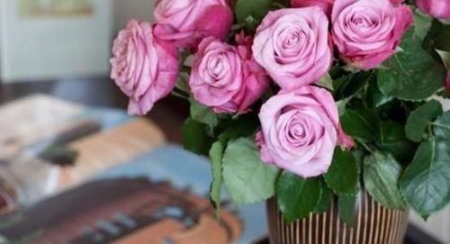 flower plant pink flower arranging rose garden roses floristry rosa centifolia land plant flowering plant flower bouquet bouquet rose family petal cut flowers floral design close containing colored