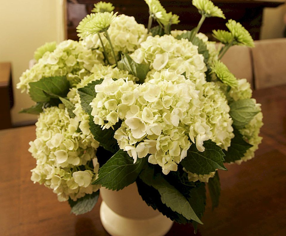 flower flower arranging plant hydrangea green hydrangeaceae floristry flower bouquet land plant floral design cornales flowering plant bouquet cut flowers close