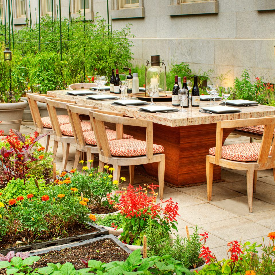 Boutique City Deck Dining Drink Eat Hip Outdoors Patio flower Garden backyard yard floristry Courtyard plant outdoor structure lawn surrounded bushes