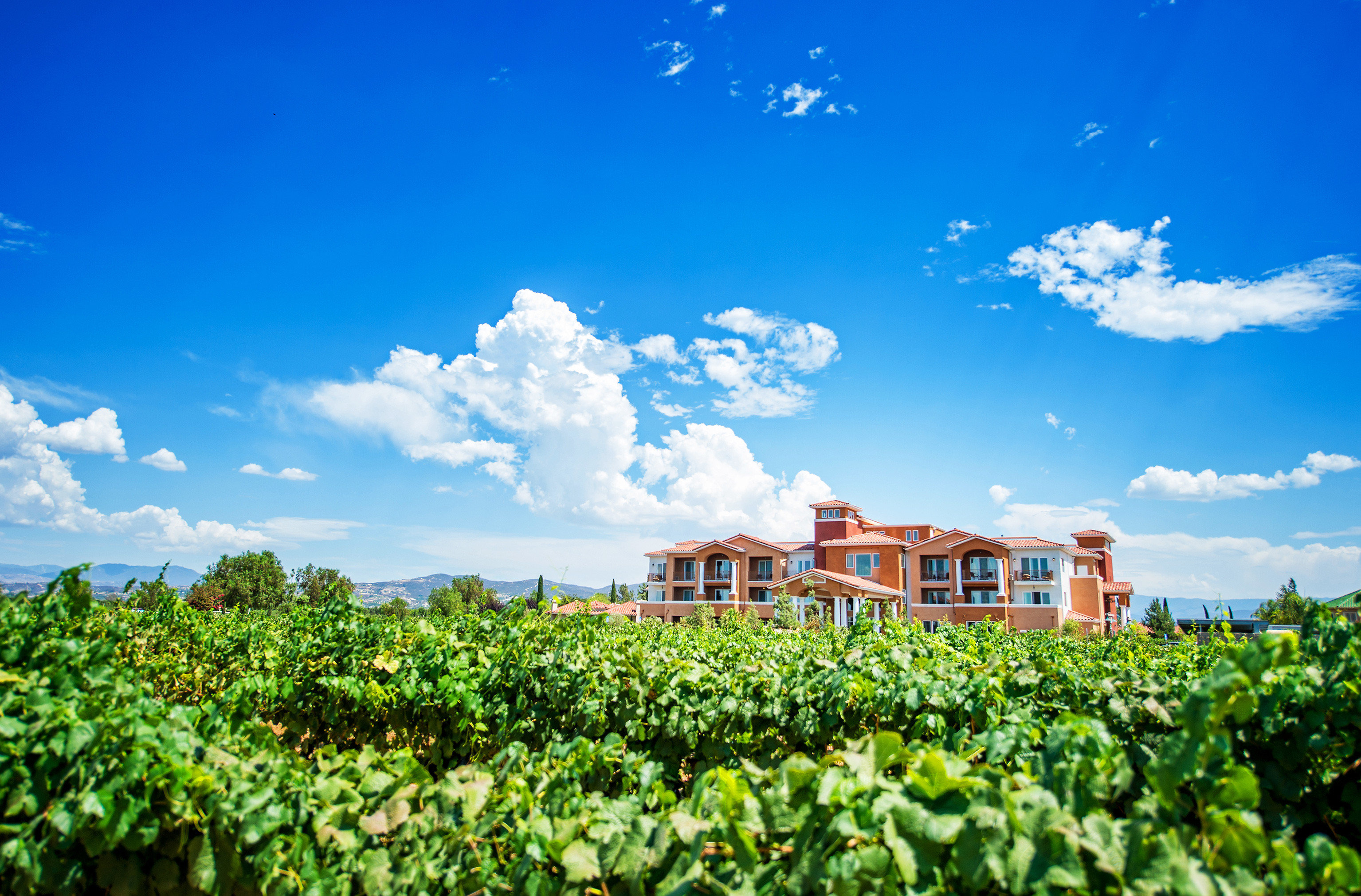 Boutique Country Grounds Romantic Winery sky agriculture field horizon flower sunlight rural area meadow plantation day