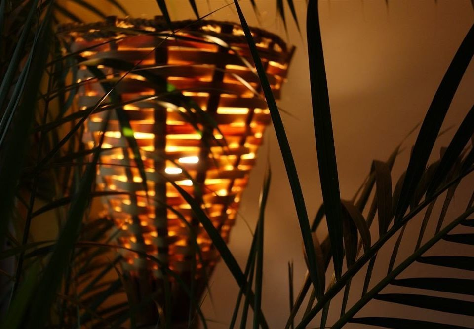 color light night lighting sunlight branch light fixture evening glass symmetry plant