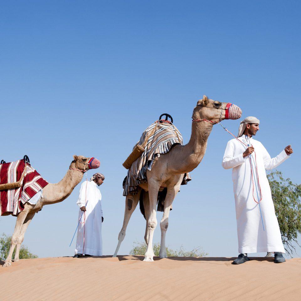 sky Camel natural environment camel like mammal landscape arabian camel Desert sahara aeolian landform