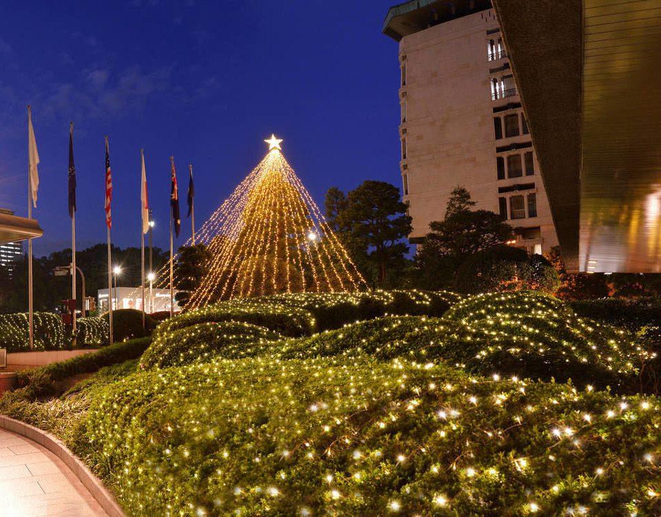 building landmark tree night christmas decoration Christmas Christmas tree evening Resort