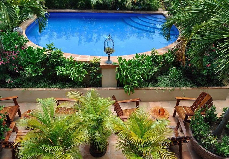 Garden Lounge Luxury Modern Pool Tropical tree plant palm swimming pool Resort backyard bushes arecales Villa Courtyard pot Jungle Water park surrounded Christmas