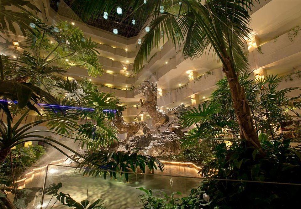 tree plant Resort arecales Jungle landscape lighting lighting mansion palm Christmas