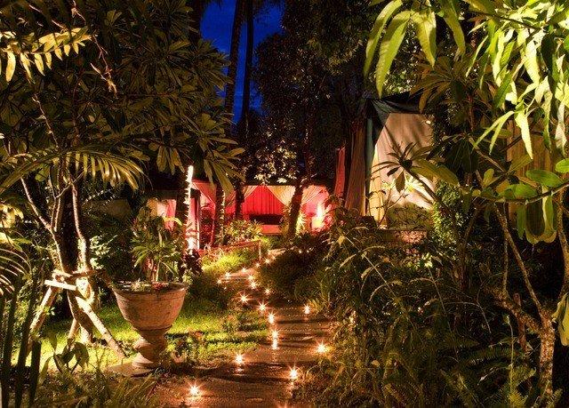 tree palm Resort Jungle landscape lighting lighting plant christmas decoration Christmas night