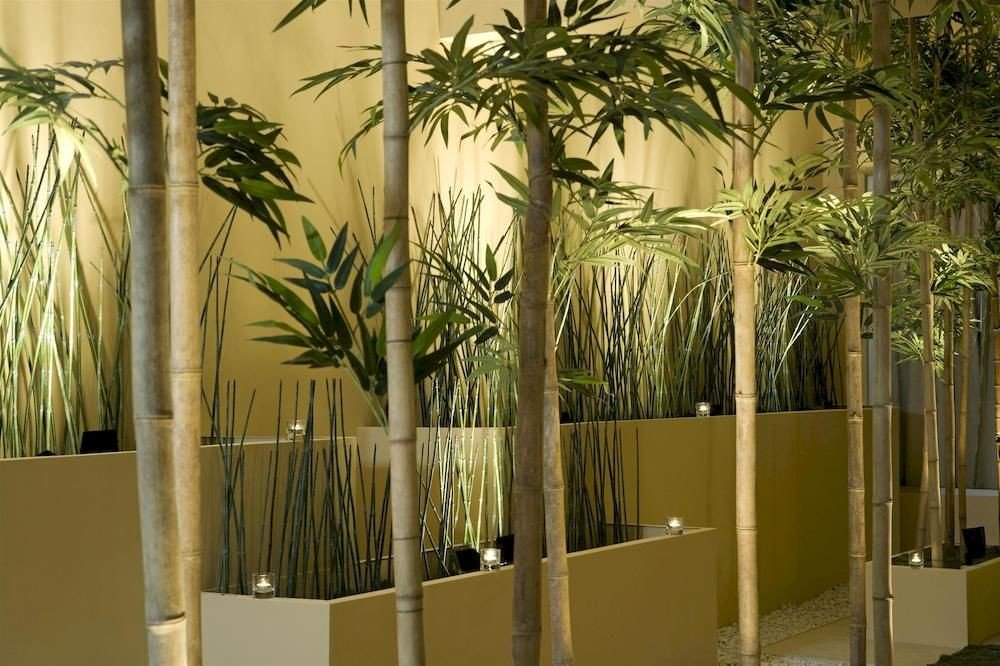 City Classic Grounds Lobby Modern plant bamboo arecales palm home palm family tree