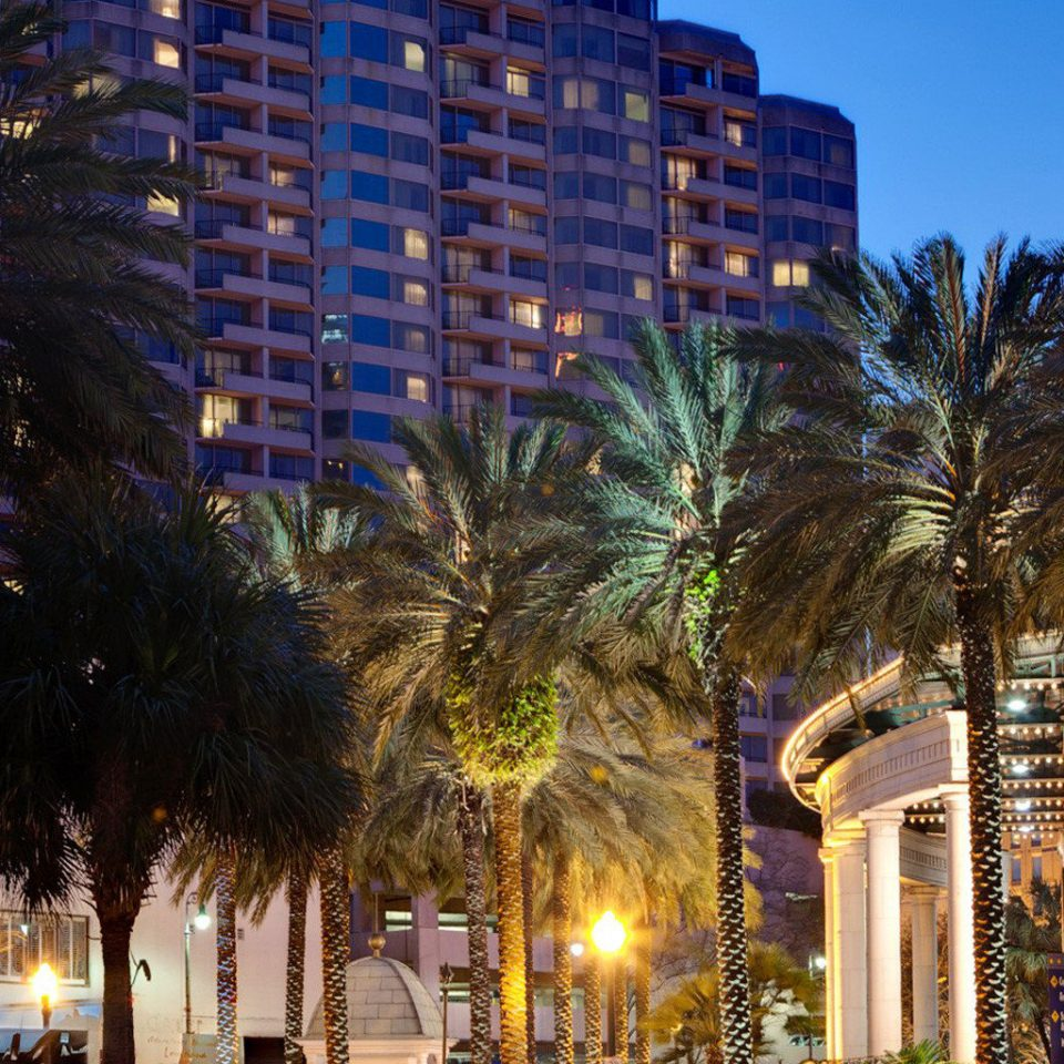 Exterior tree sky night City landmark Town cityscape light Downtown evening arecales palm woody plant Resort plaza palm family flower apartment building