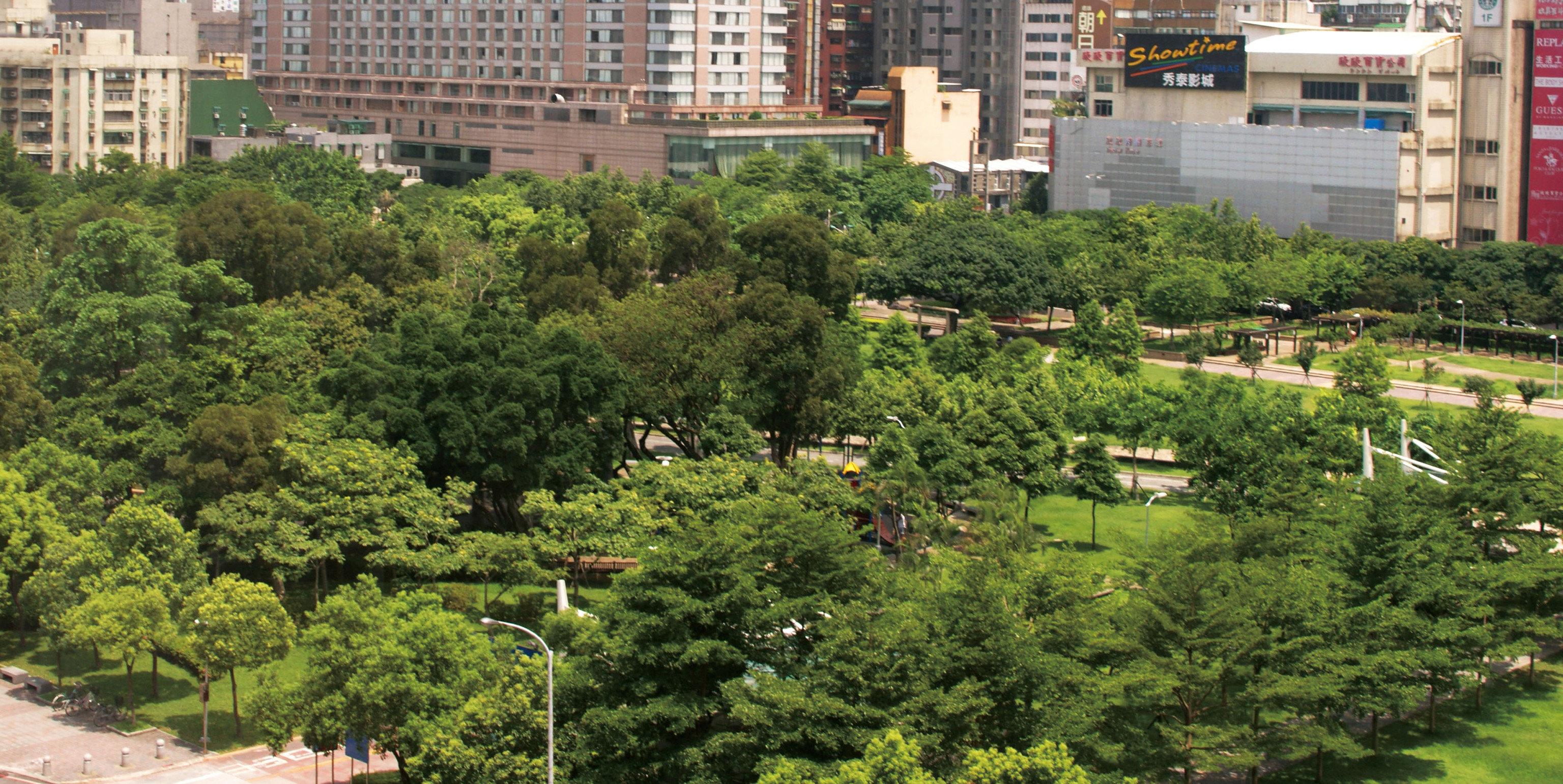 tree residential area neighbourhood City Town Garden suburb