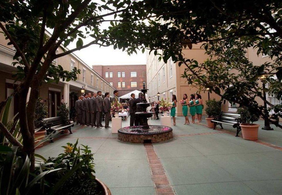 tree City plaza Resort plant