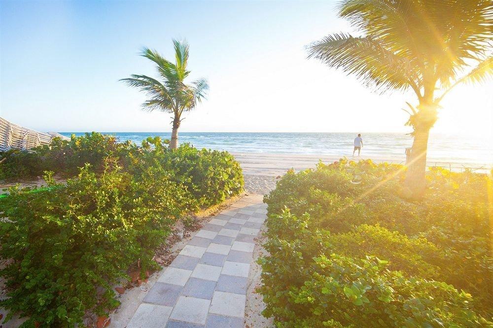 tree sky water plant arecales sunlight Coast palm