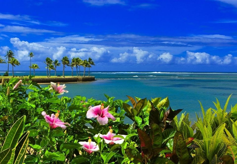 sky flower ecosystem shore Nature Coast Sea pink caribbean meadow tropics plant colorful clouds