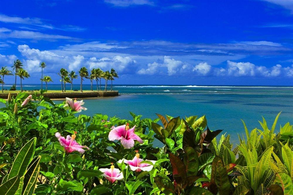 sky flower ecosystem shore Nature Coast Sea pink caribbean meadow tropics plant colorful clouds
