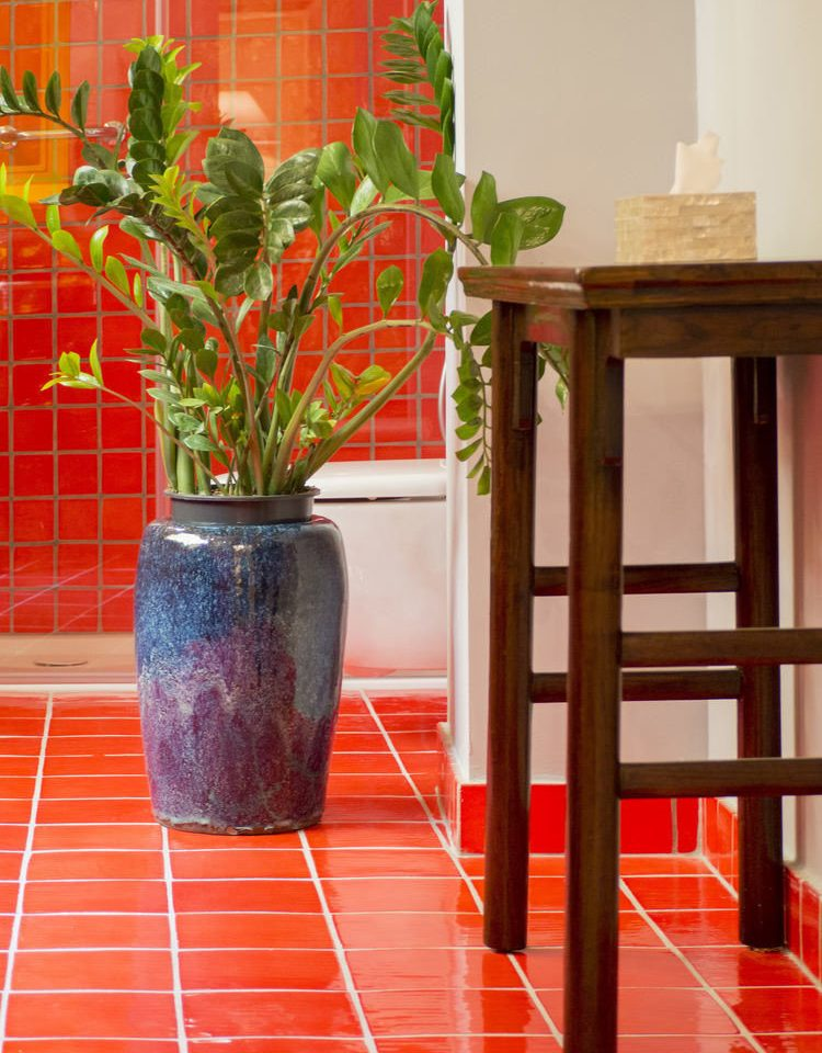 color red plant flooring floristry flower flowerpot