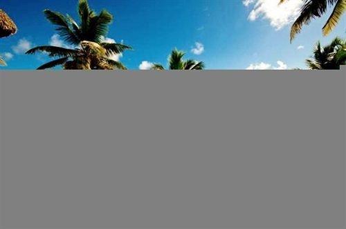 plant natural environment ecosystem palm tree screenshot computer wallpaper