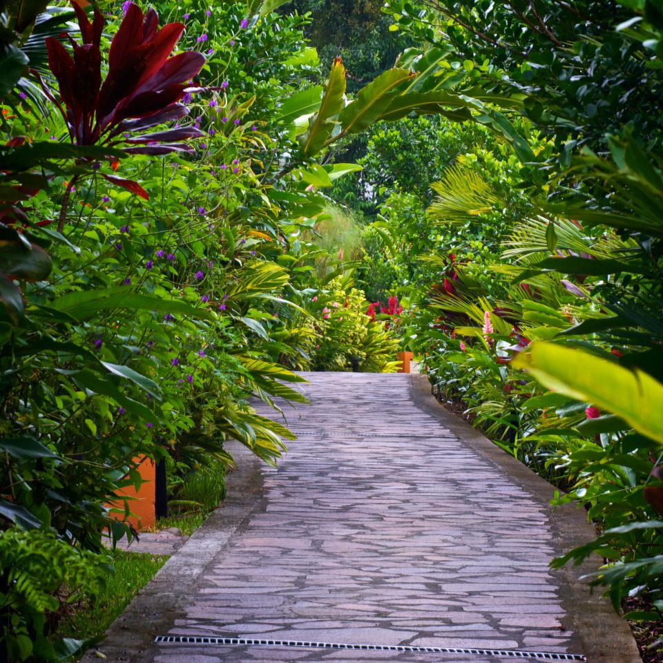 Country Eco Grounds Jungle Romantic Rustic tree plant habitat vegetation green natural environment Garden flora botany rainforest flower leaf Forest walkway backyard botanical garden yard tropics arecales Courtyard lawn plantation greenhouse sidewalk bushes stone surrounded