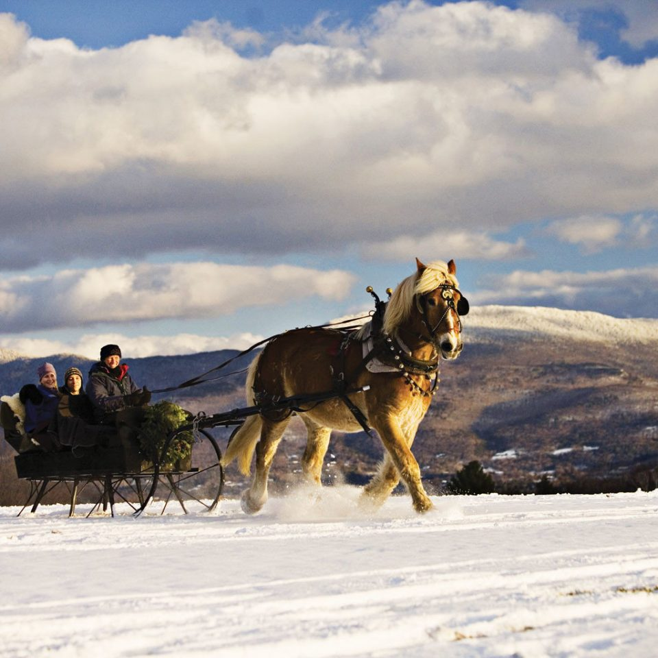 Country Family Family Travel Lodge Mountains Outdoor Activities Outdoors Ski Trip Ideas sky snow transport Winter vehicle Dog weather season dog like mammal clouds day