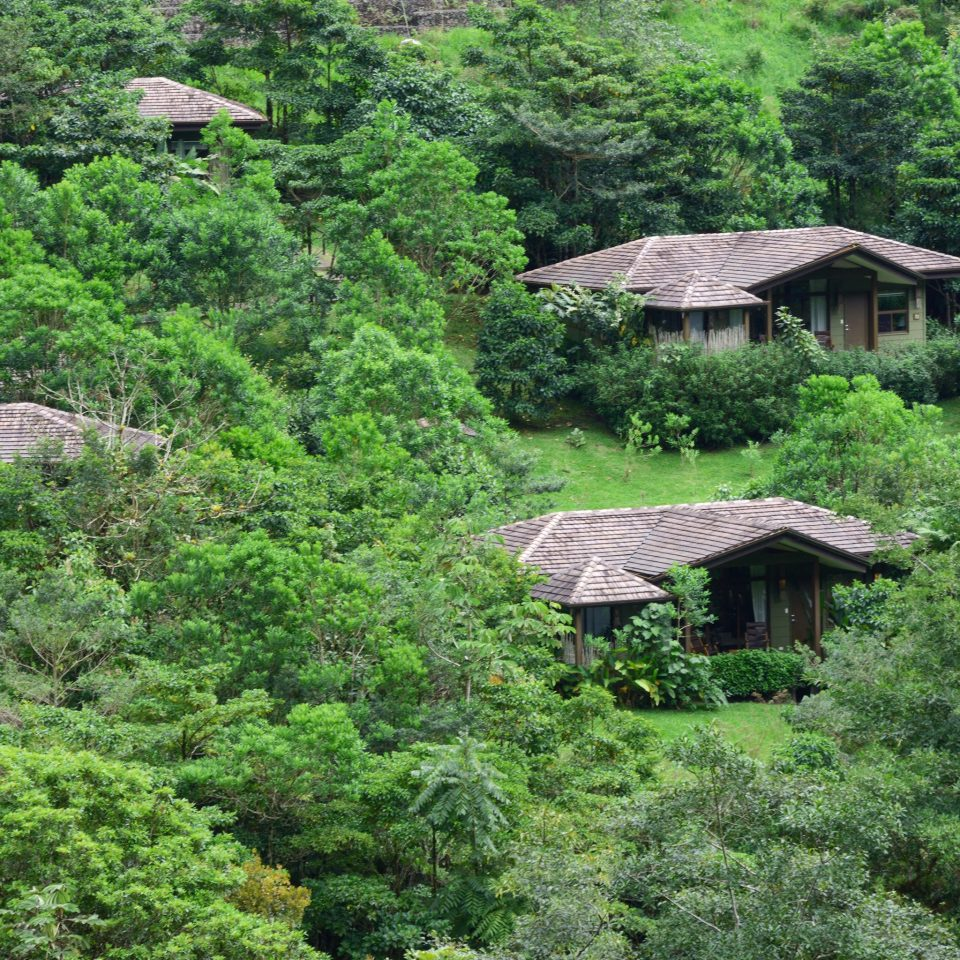 Country Eco Exterior Lodge Mountains Rustic Scenic views Wellness tree habitat vegetation wilderness rainforest natural environment ecosystem Forest Jungle old growth forest woodland rural area lush hut biome Garden wooded hillside surrounded
