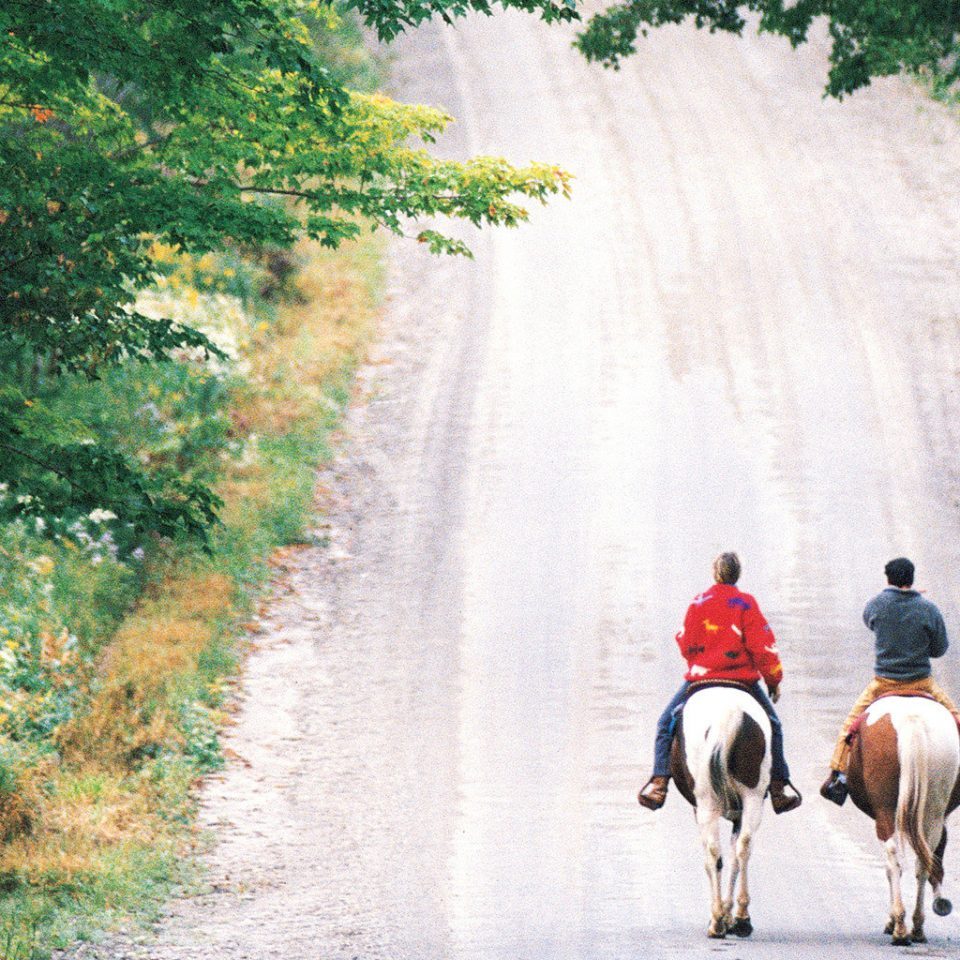 Country Family Forest Lodge Outdoor Activities Outdoors tree road grass riding street path season rural area trail rider water feature autumn walking dirt traveling