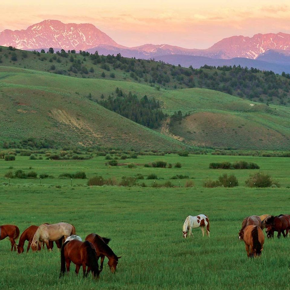 Country Mountains Ranch Rustic Scenic views grass mountain field sky cow pasture habitat grazing mountainous landforms grassland herd animal green natural environment bovine mammal meadow ecosystem plain prairie cattle like mammal agriculture steppe rural area hill grassy landscape plateau cattle background Farm mountain range canyon lush distance highland hillside