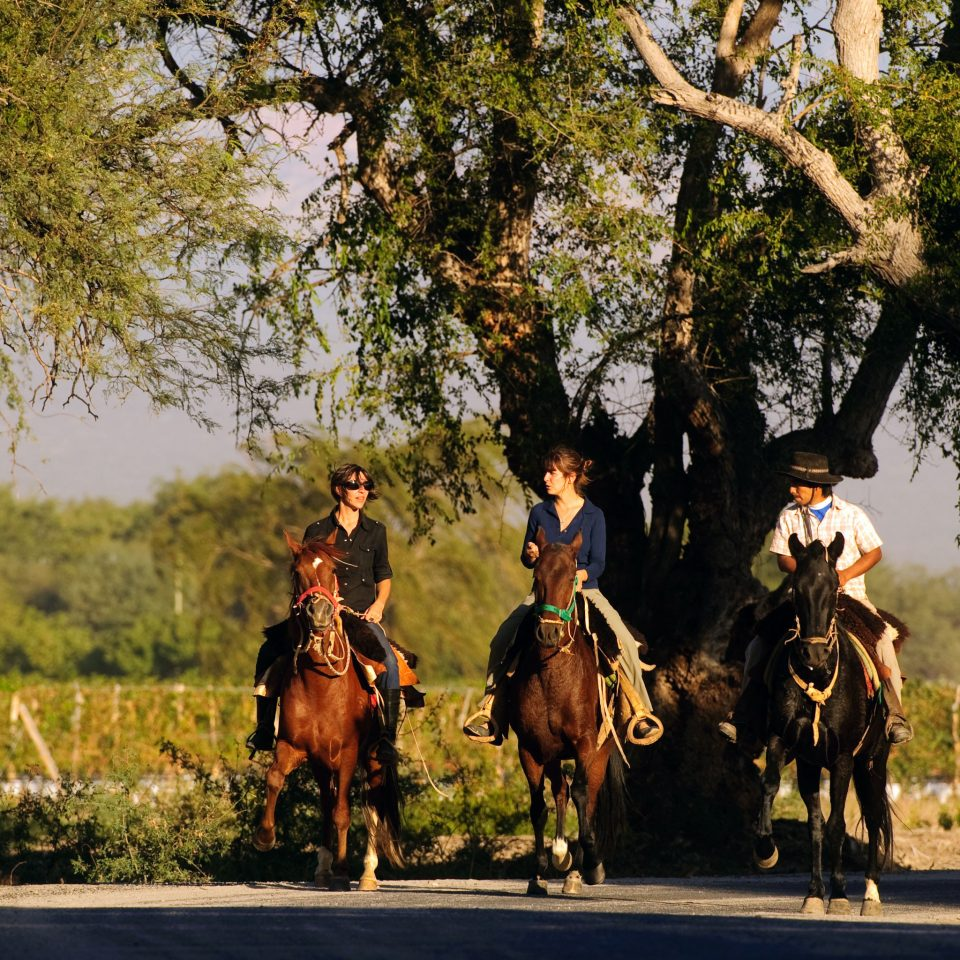 Country Garden Grounds Mountains tree horse riding road equestrianism group rural area horse like mammal animal sports eventing trail riding