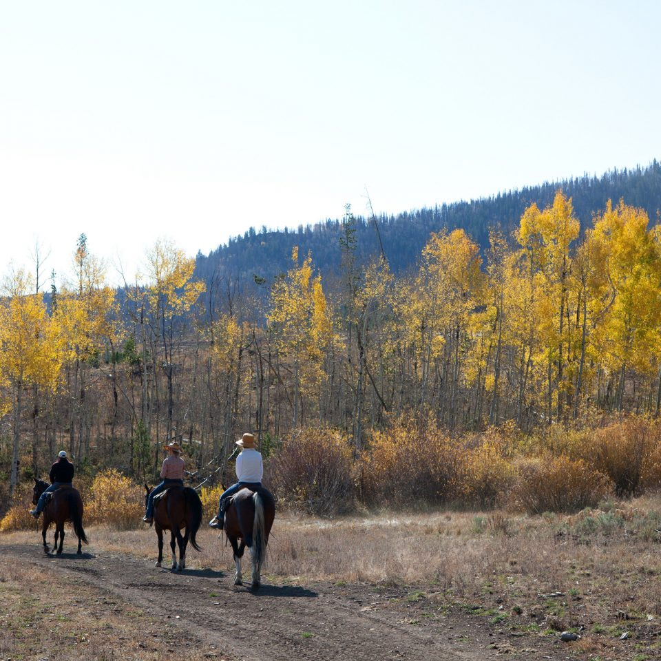 Country Mountains Ranch Rustic Scenic views sky tree grass wilderness ecosystem season sports prairie mountain autumn animal sports group meadow walking ridge trail mammal horse