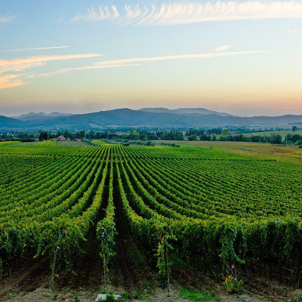 Country Scenic views Wine-Tasting Winery grass sky agriculture field green Nature Vineyard grassland hill lush plantation rural area plain landscape paddy field soil grassy plateau flower crop Sunset valley pasture overlooking distance land hillside highland