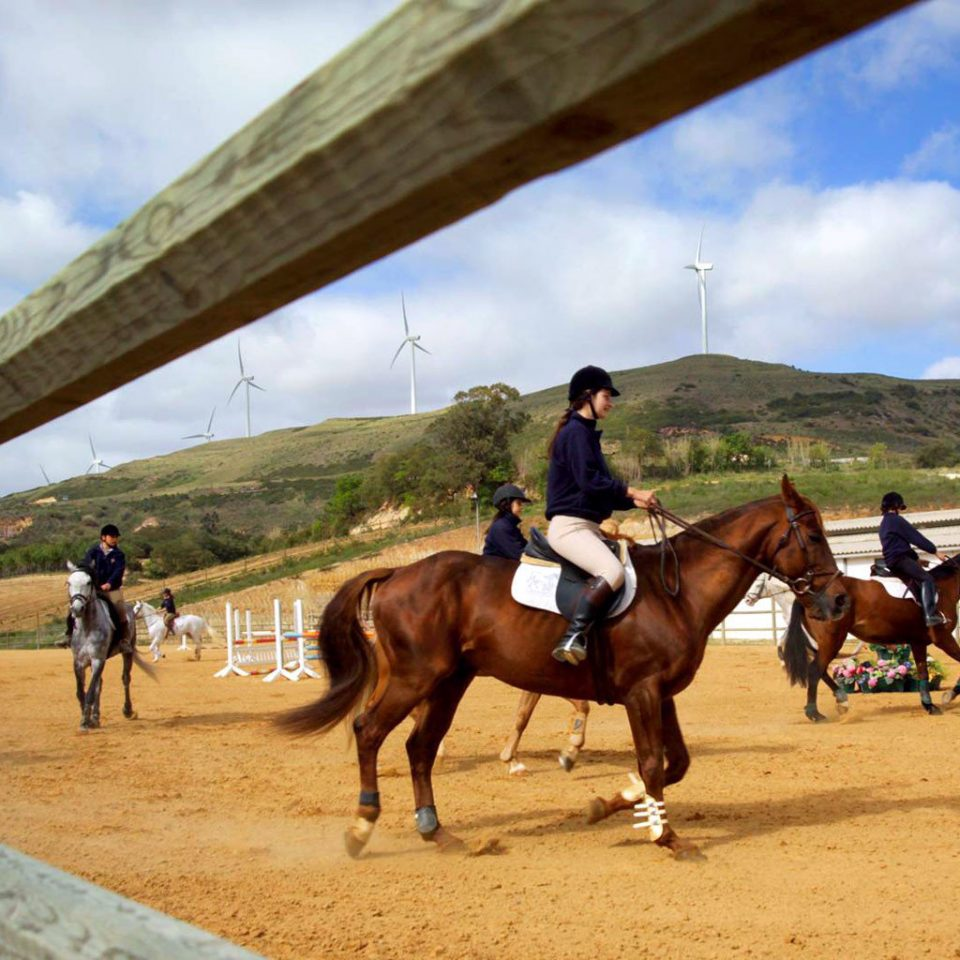Country Outdoor Activities Outdoors Scenic views Sport sky horse ground equestrianism english riding sports western riding equestrian sport animal sports eventing horse like mammal dressage mare stallion jumping reining