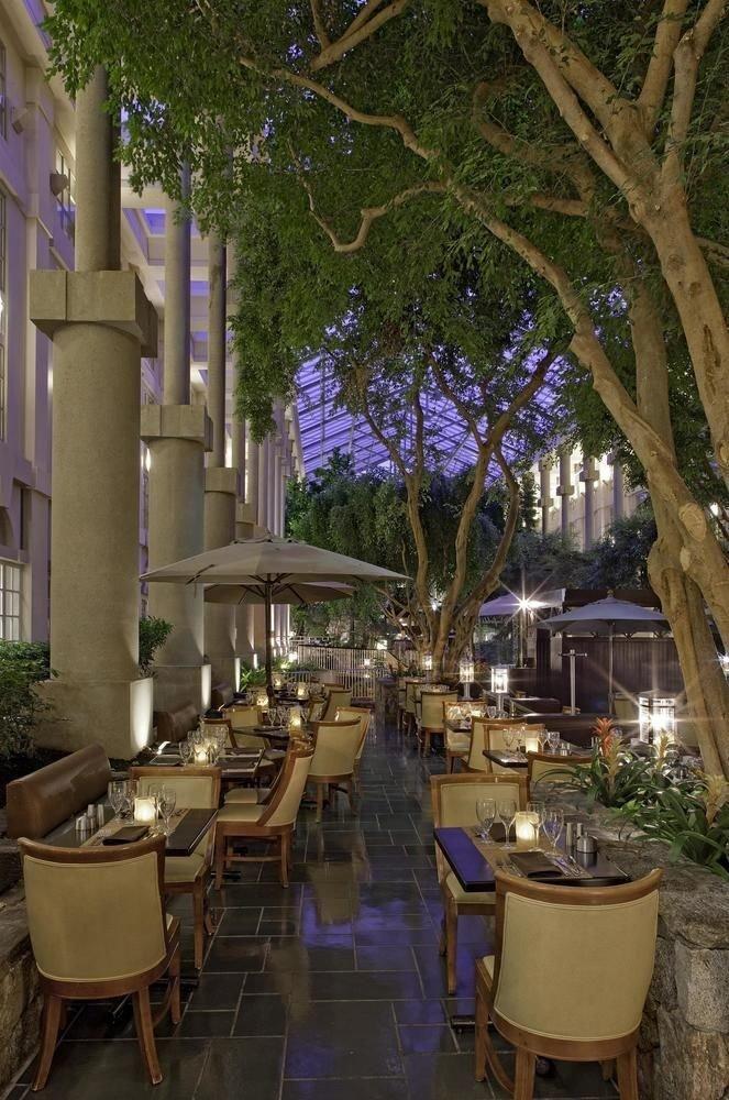 tree flower Courtyard restaurant backyard