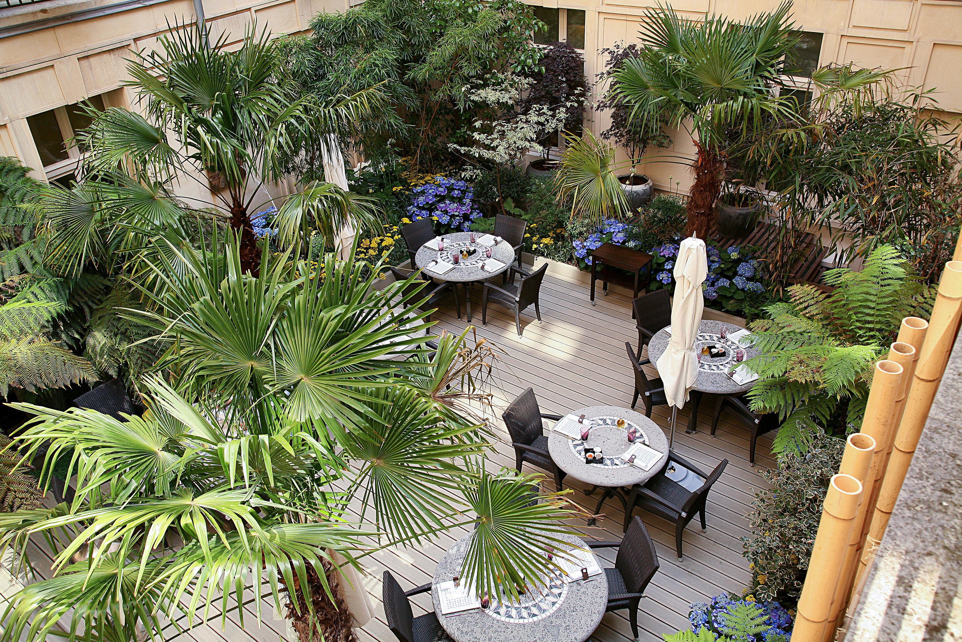 Courtyard Dining Drink Eat Elegant Lounge Luxury Modern Patio Terrace tree plant Garden botany yard backyard arecales home flower palm Resort landscaping arranged