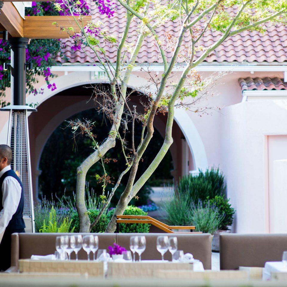 Dining Drink Eat building floristry flower arranging flower backyard home Courtyard floral design plant