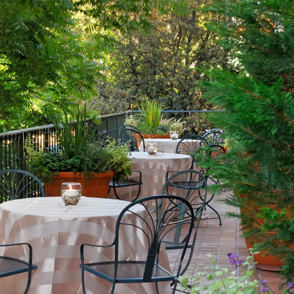 Dining Drink Eat Patio Romantic Terrace tree backyard Garden yard cottage home outdoor structure flower Courtyard woodland plant surrounded
