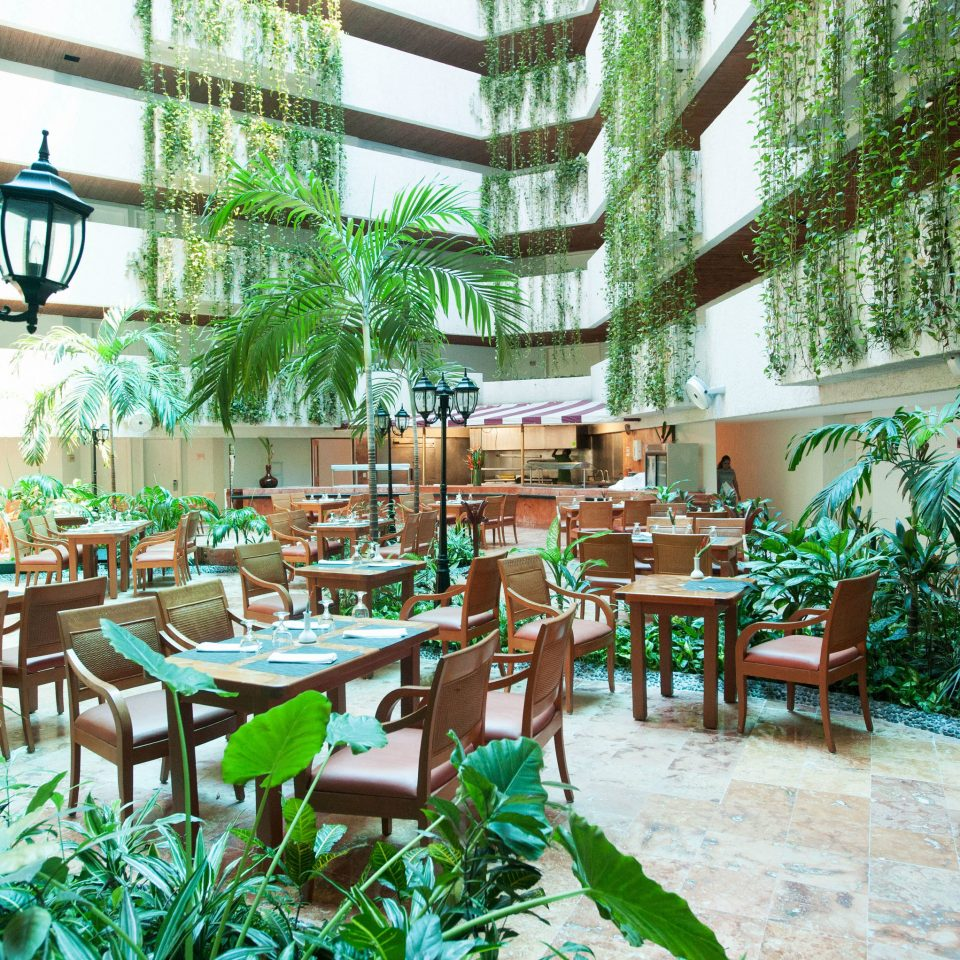 chair property Resort plant restaurant Dining condominium Courtyard floristry Garden plaza