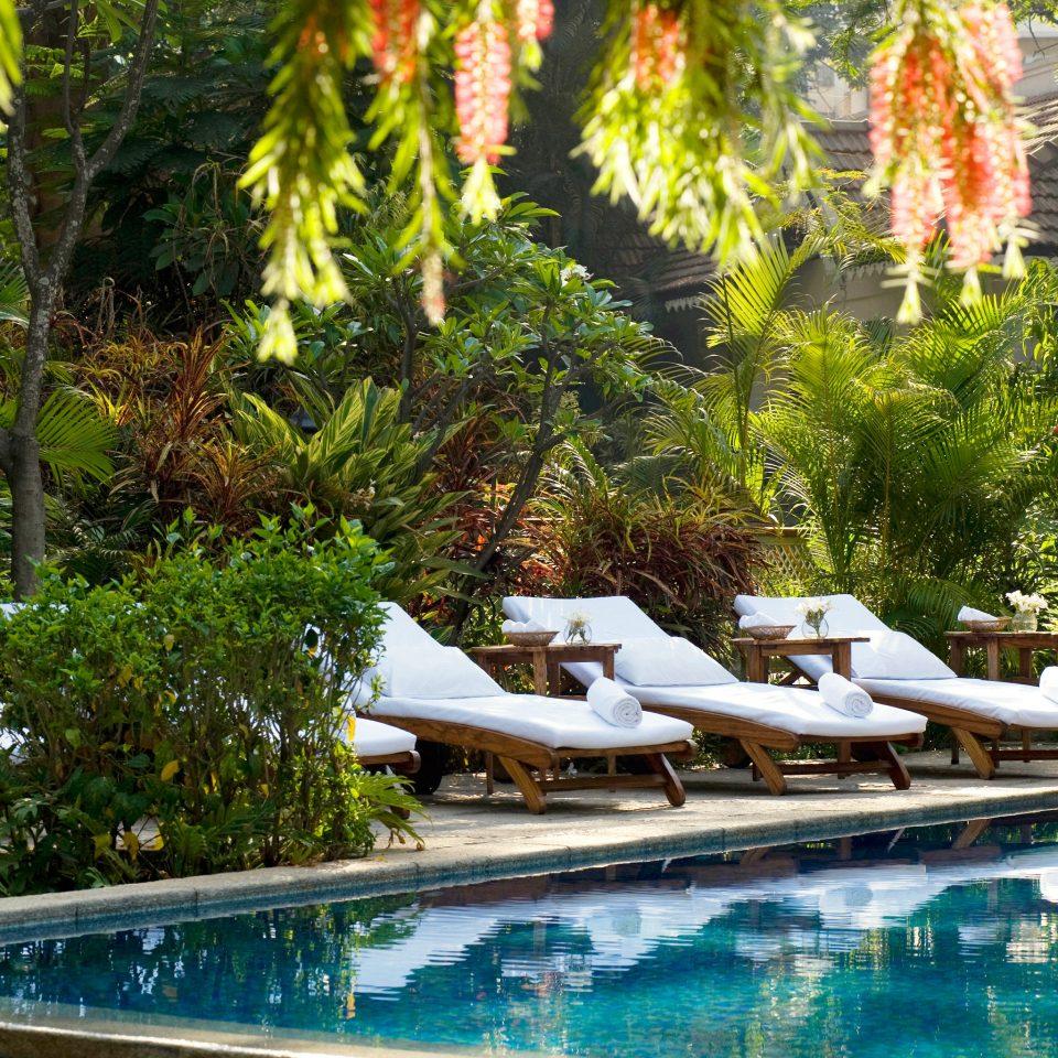 Elegant Luxury Pool Wellness tree swimming pool Resort backyard Villa Garden Courtyard