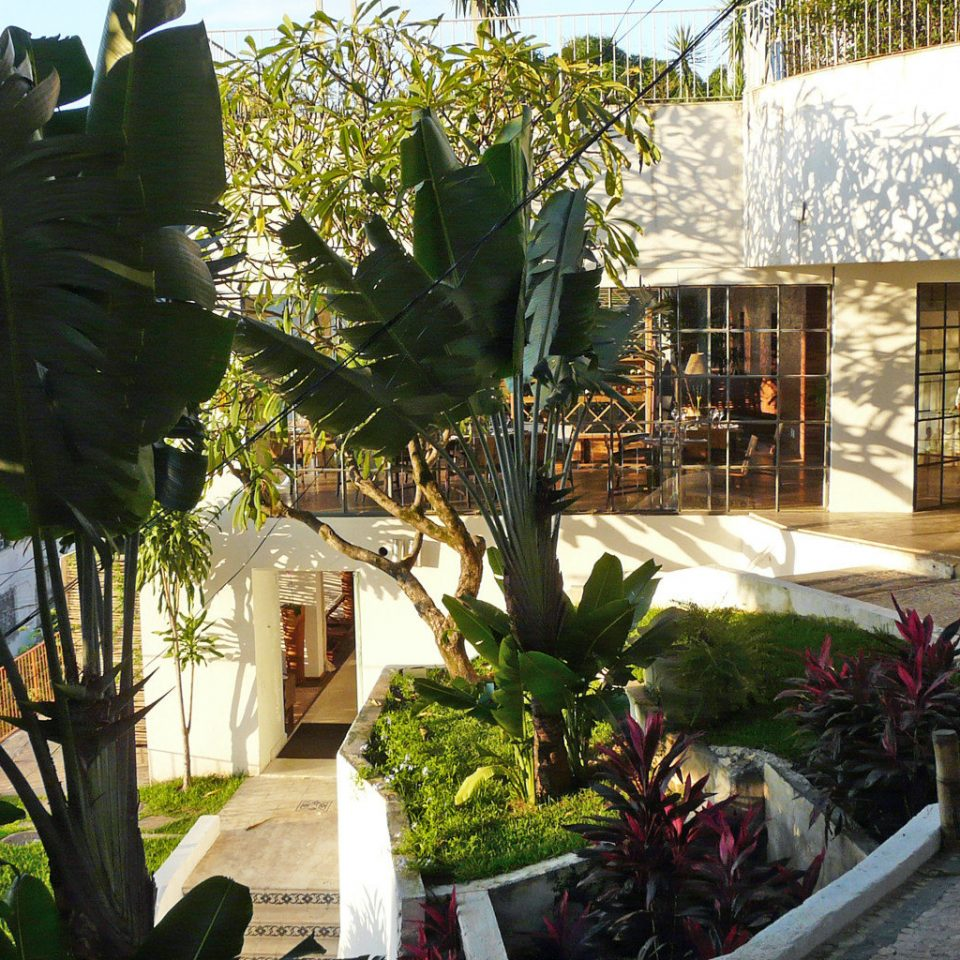 Exterior Grounds Modern plant botany floristry arecales flower Courtyard Garden