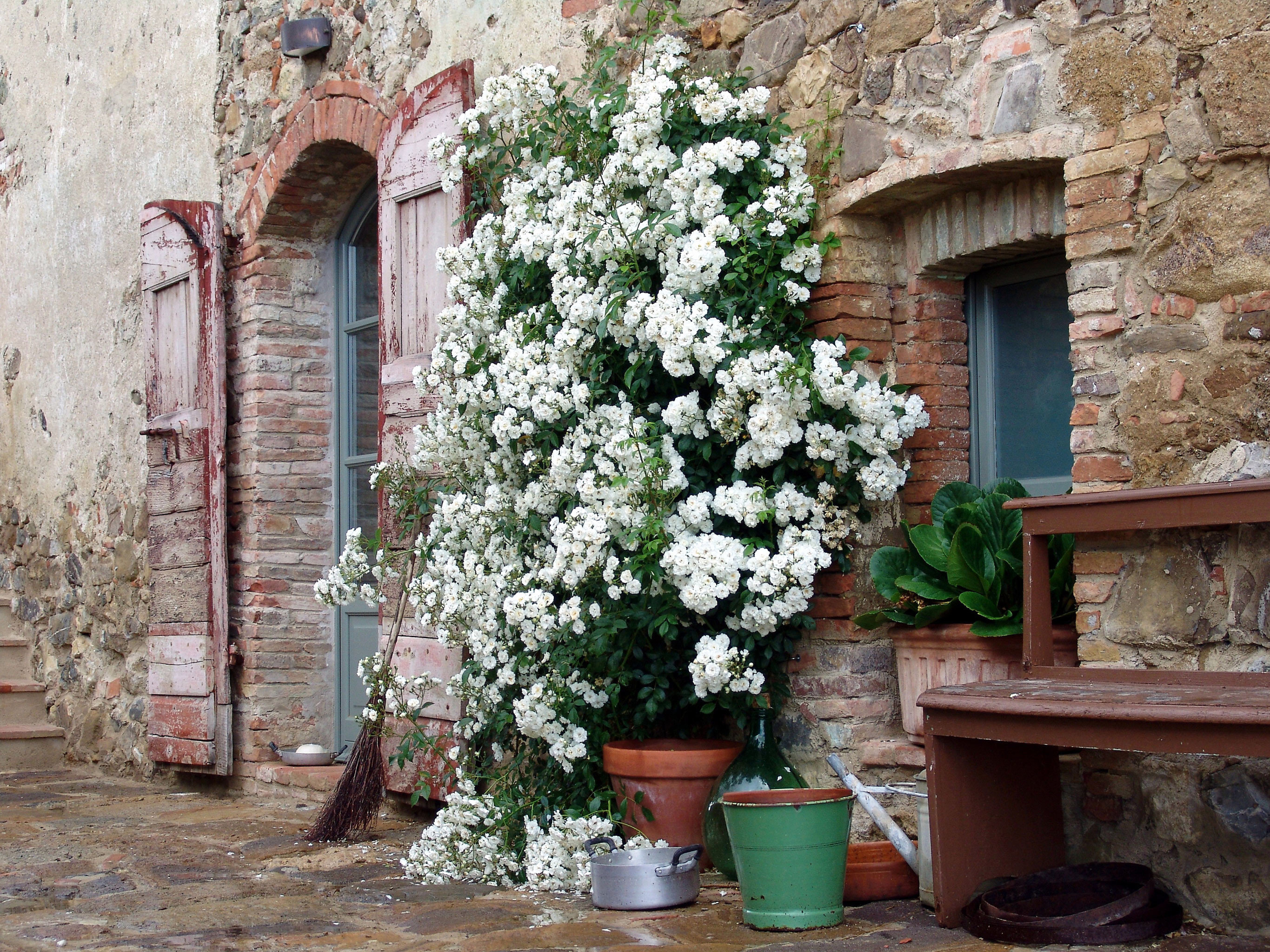 Exterior Garden Grounds Lounge building flower plant floristry old spring stone land plant cottage blossom flowering plant Courtyard