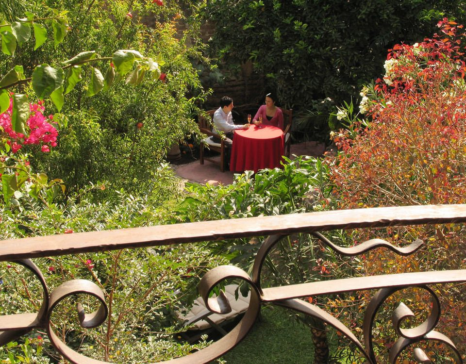 tree flower park Garden botany plant yard green backyard wooden lawn Courtyard shrub outdoor structure bushes bench surrounded