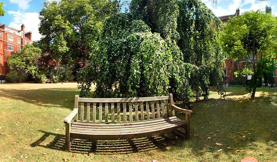 tree bench park ground grass wooden Garden plant plaza Courtyard backyard yard empty surrounded shade day