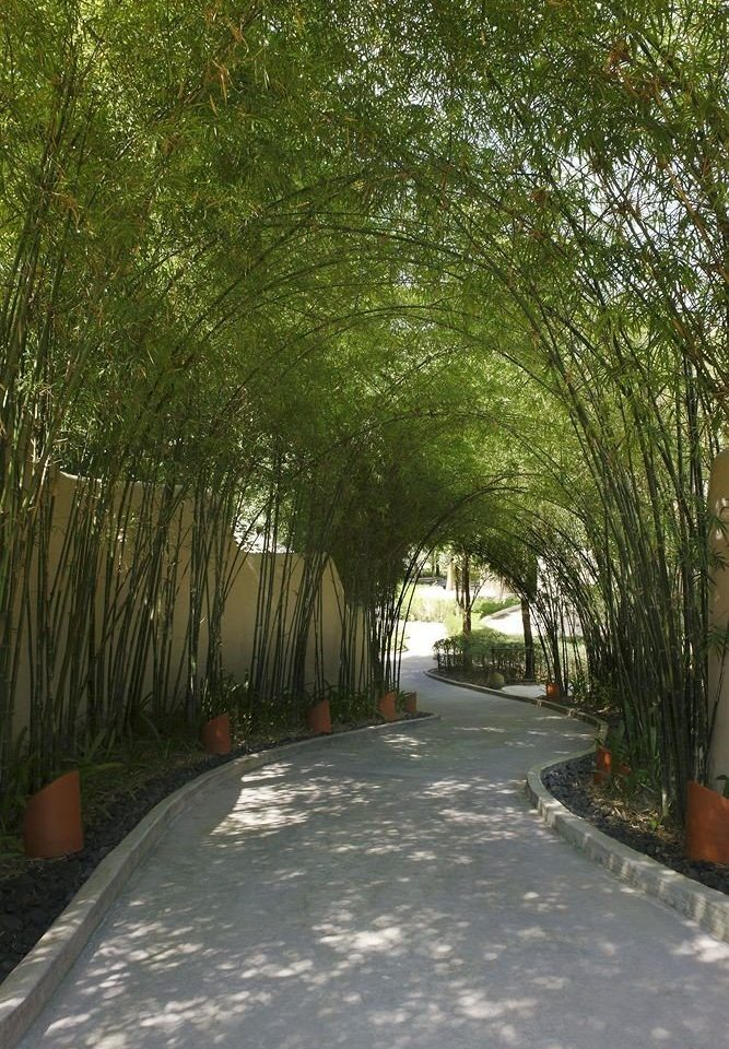 tree plant property willow woody plant yard Garden backyard walkway Courtyard lawn