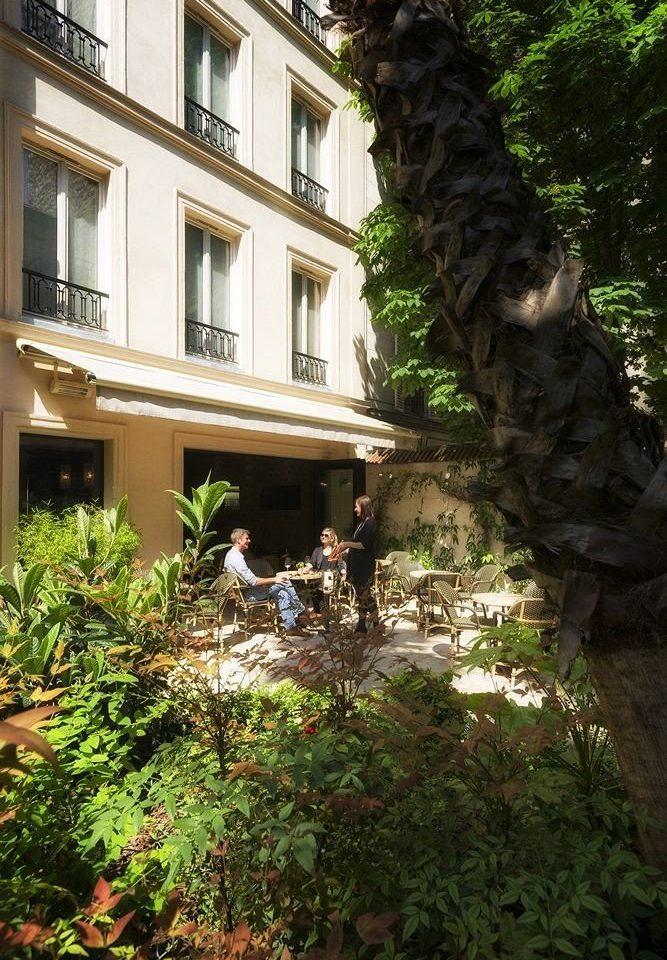 tree plant Garden Courtyard bushes