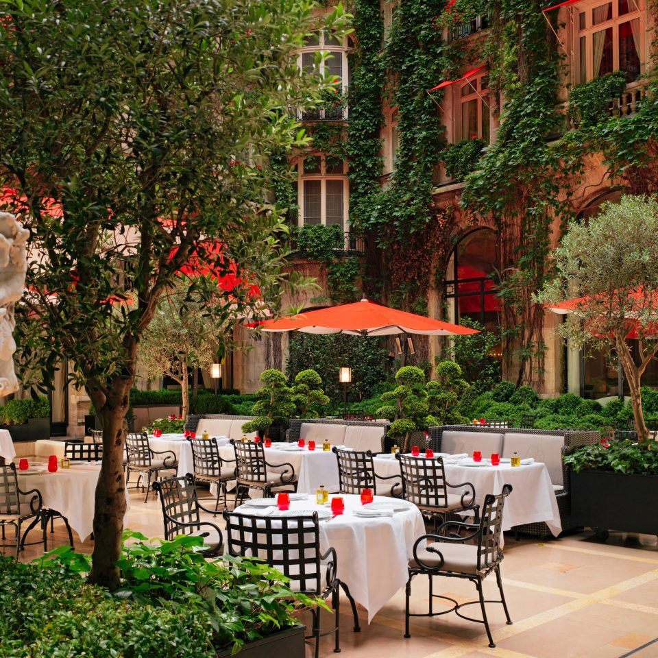 Hotels Luxury Travel tree floristry Courtyard Garden flower restaurant backyard plaza