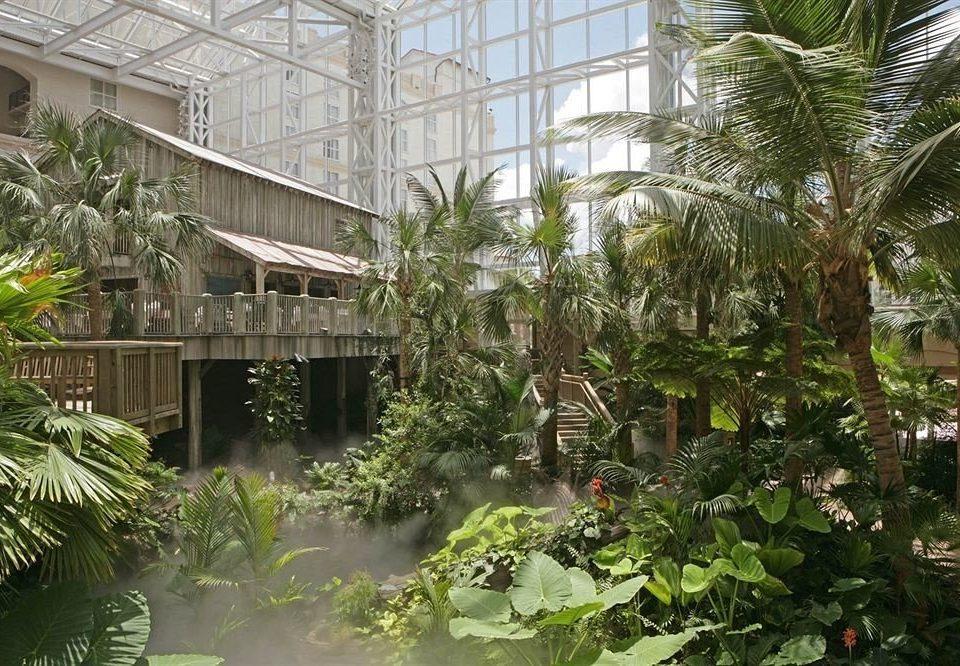 tree palm Garden Resort plant botany greenhouse Courtyard arecales backyard Jungle outdoor structure flower botanical garden yard