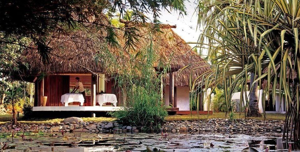 tree house plant home Resort cottage Village Courtyard hacienda Jungle Garden palm