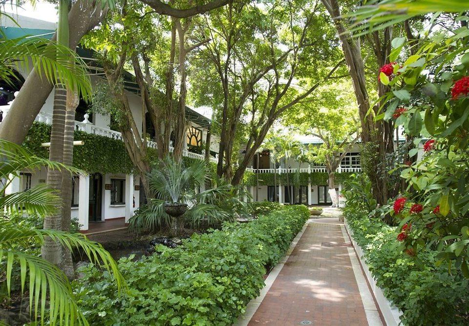 tree plant property Resort botany Garden house flower Courtyard walkway botanical garden Jungle cottage plantation yard arecales palm bushes